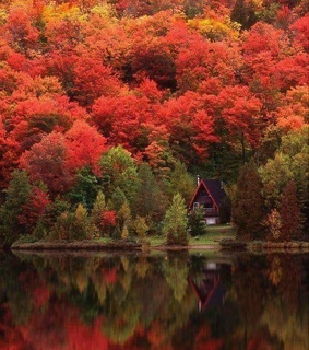 autumn, otoño and forest