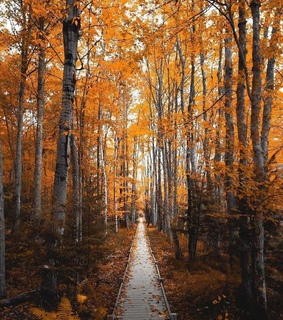 paisajes, autumn and forest