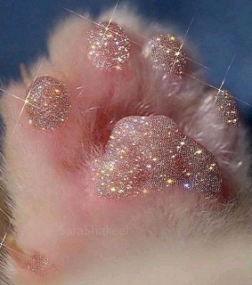 animals, paws and aesthetic