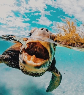 tropical, turtle and ocean