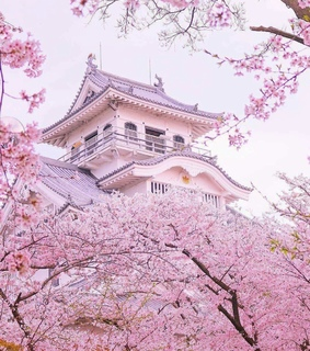 tree, pink and blossom