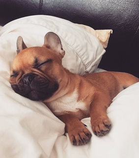 sleeping, bed and love
