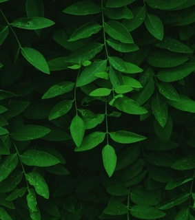 green, aesthetic and theme