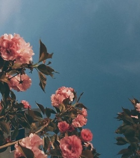 wallpaper, flowers and aesthetic