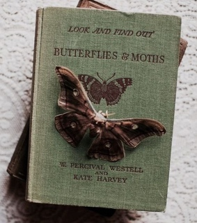 butterflies, butterfly and moth